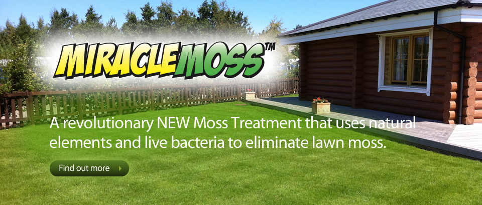 Moss removal by Lawn3 Northeast